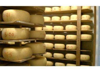 Cheese at Joe Matos Cheese Factory