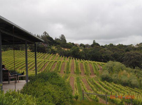Baker Lake Vineyards View
