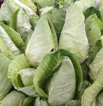 conehead-cabbage